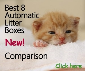 Cat Food Dispensers Choose The Best Feeder For Your Cat