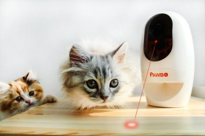 Pawbo's laser dot game
