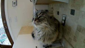 Aquapurr Cat Water Fountain – Full Review