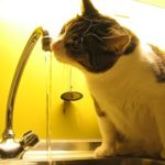 AquaPurr eC Cat Drinking Fountain With Motion Sensor Review