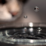 Why Your Cat Doesn't Drink From A Water Bowl And Tips to Resolve It