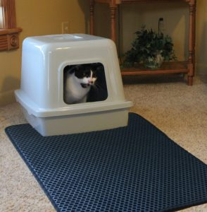 Cat and Litter Mat