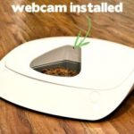 Best Wi-Fi Pet Feeder: The Feed and Go