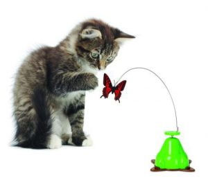 Pet Zone Fly by Spinner Toy Review