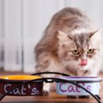 Cat Friendly Elevated Feeder Ceramic Bowl Review
