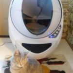 Best 8 Automatic Cat Litter Box Comparison