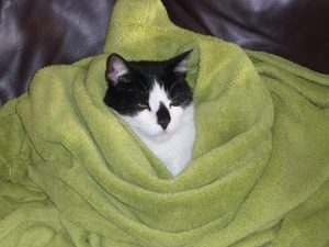 What's The Ideal Temperature At Home For A Cat?