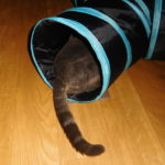 How To Gain Your Cat's Trust?