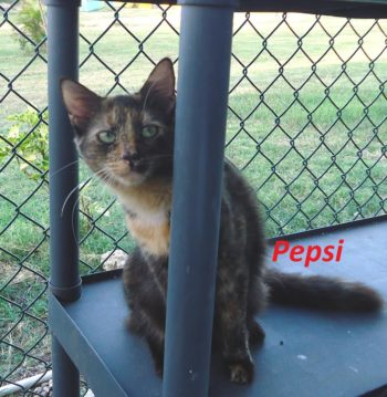 Cute Pepsi
