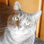 How My Cat Got Cured From Watery Eye Discharge