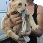 The Hope Sanctuary, A Cat Shelter Story In Barbados