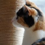 Why Female Cats Spray and How to Prevent It?