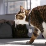 7 Reasons Why Your Cat Follows You Everywhere