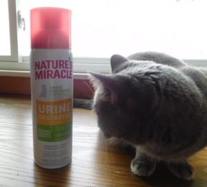 "Catnip Could Be The Cause Of Litter Box ""Accidents"""