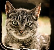 7 Benefits Of Using Automatic Cat Doors