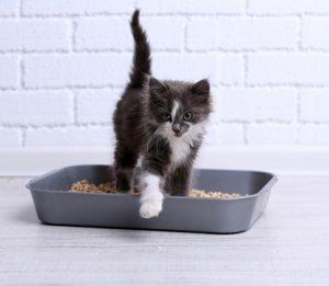 How To Litter Box Train A Kitten