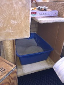 Find The Best Spot To Put The Cat Litter Box!