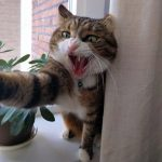 How To Stop A Cat From Bullying Another Feline