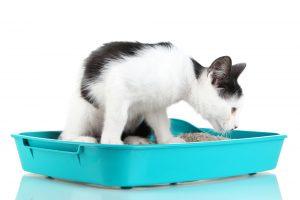 Why Do Cats Eat Litter?