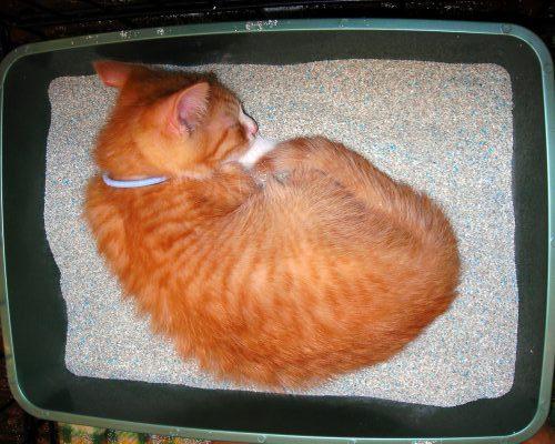 Cat Sleeps By Litter Box