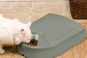 Best 7 Automatic Wet Food Feeders For Cats | Comparison